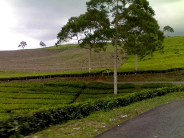 Kebun Teh Gunung Dempo